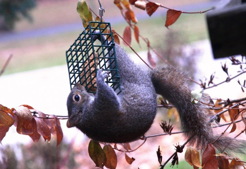 Keep squirrels out of your bird feeder.
